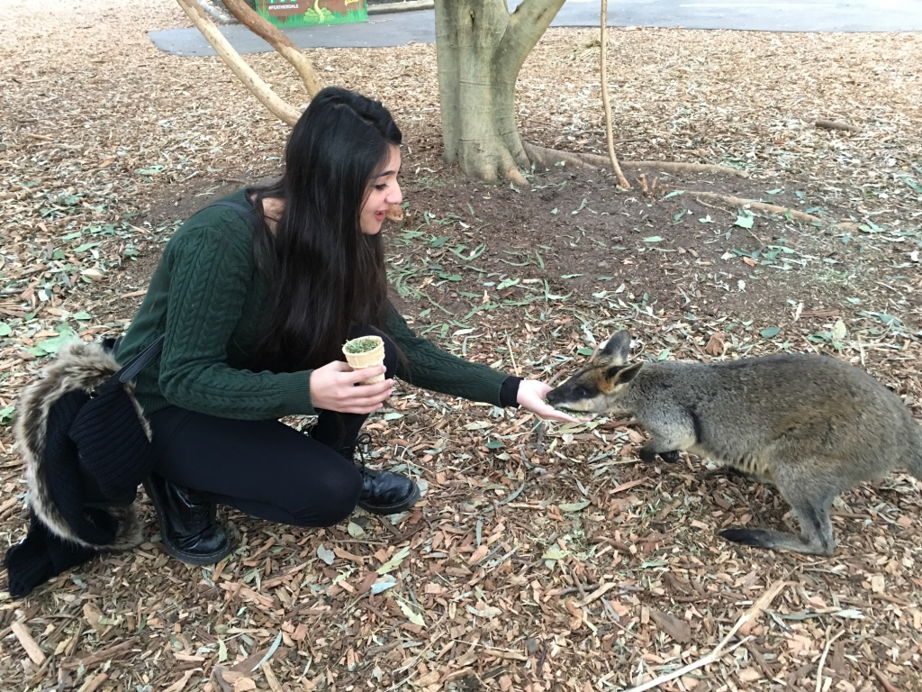 Feeding the Kangroos (1)