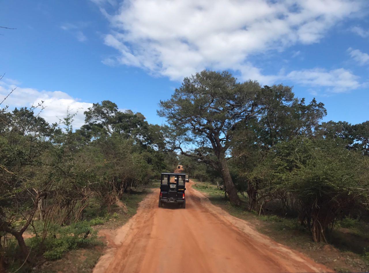 Yalla Safari